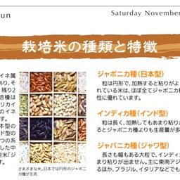 画像 【米の日本史と雑学】稲作の始まりは縄文時代! の記事より 7つ目