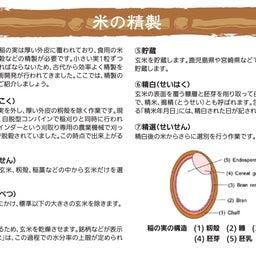 画像 【米の日本史と雑学】稲作の始まりは縄文時代! の記事より 8つ目