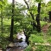 世界も注目する、日本の森から生まれたアロマ。の画像