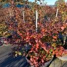 ニューハノーバーの紅葉が美しいの記事より
