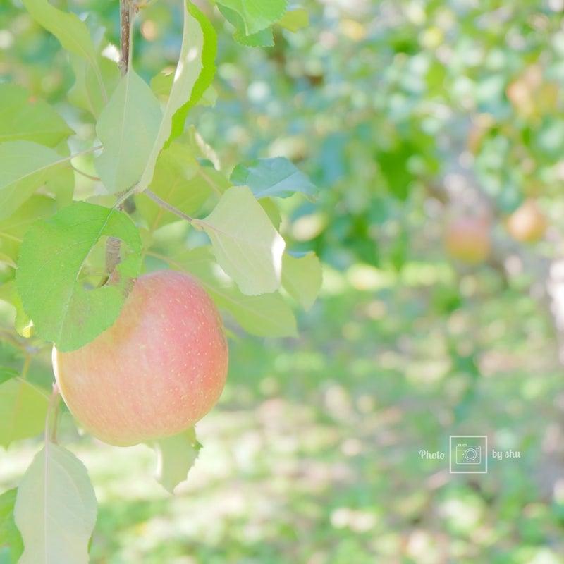 りんご 実りの秋