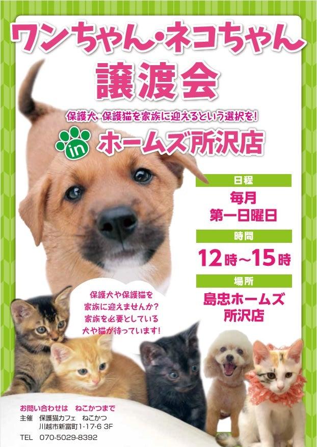 埼玉 譲渡 保護 犬 会