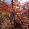 ☆★江原道名誉外信記者団第9弾★☆ 雪岳山(살악산)②の画像