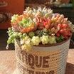 陶器のうつわに寄せ植えをつくるとき。