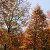 紅葉の季節の画像
