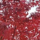 東大寺周辺を歩きたいが?・・(^_-)-☆の記事より
