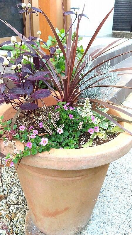 紫系でまとめた一鉢の画像