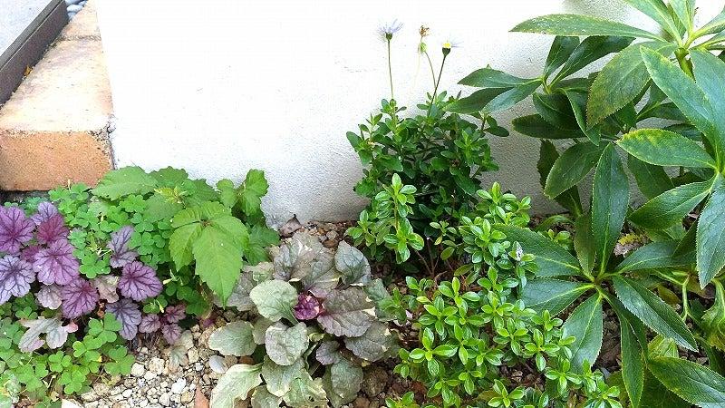 塗壁門柱手前スペースに植えた草花