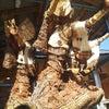熊本~高千穂への旅2の画像