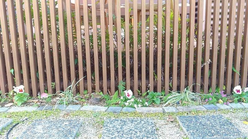 スクリーンフェンス手前に植えたパンジーとバコパ
