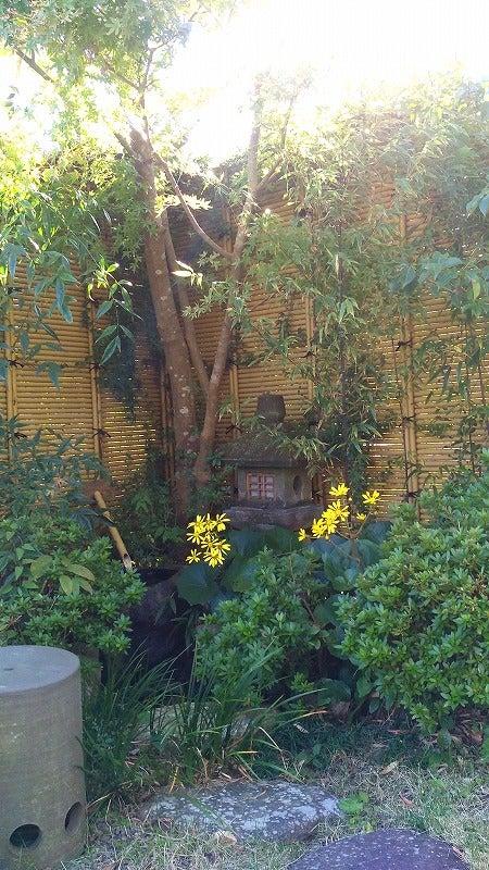 ミニ坪庭の画像