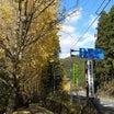 桜三里の銀杏並木を散策、(^^♪