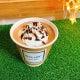 ☕️#Loa cafe*☕️