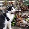 珍しく貴重な植物たち&ほぼ丸見え猫|ωФ≡)