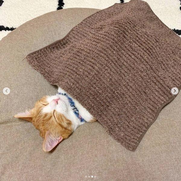 猫 仰向け で 寝る