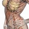下腿三頭筋はアキレス腱と踵骨の付着部に対する筋膜リリース、前脛骨筋は第一中足骨の足底面に対する圧