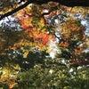 秋でありんすの画像