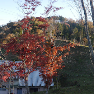 恵那峡の紅葉の画像