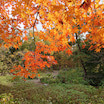 大阪は紅葉が見ごろですよ!