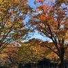 秋深まる。の画像