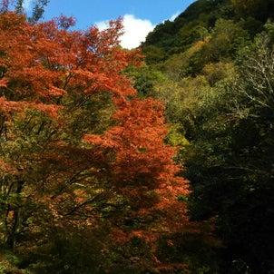 紅葉を見に行ってきました。の画像