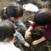 芋掘り体験~の画像