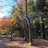 日本の樹木が生み出す、アロマウォーター。の画像