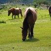 御嶽山と木曽馬(長野県)撮り溜めた写真です。