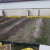 なかよしこども園の菜園作りにの画像
