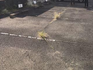 駐車場ライン引き(^O^)