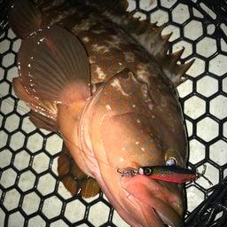 画像 タチウオ、キジハタ、ヒラメ、マゴチ、根魚 の記事より 7つ目