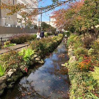 烏山川緑道を歩く