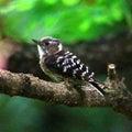 万葉の森の野鳥(周南市)コゲラ・メジロ・ヤマガラ・スズメ