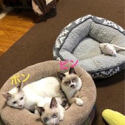 画像 保護犬、保護猫ちゃんの里親募集中です^_^ の記事より 3つ目