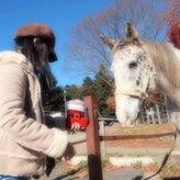 猫と馬と日々の色々なこと