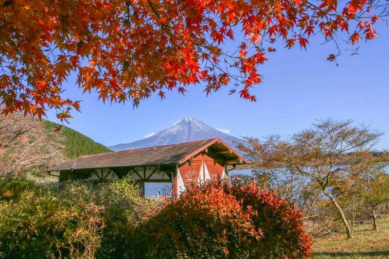 もみじ 富士山