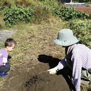 自然栽培とそのほかの農法を比較してみたの画像