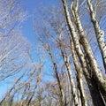 原村の森の静かな時間