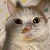 自撮りが上手な猫の画像