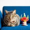 【撮影レポNo.157】愛猫ちゃんと一緒に年賀状に使える写真撮り