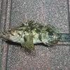 12月10日釣行 in石巻の画像