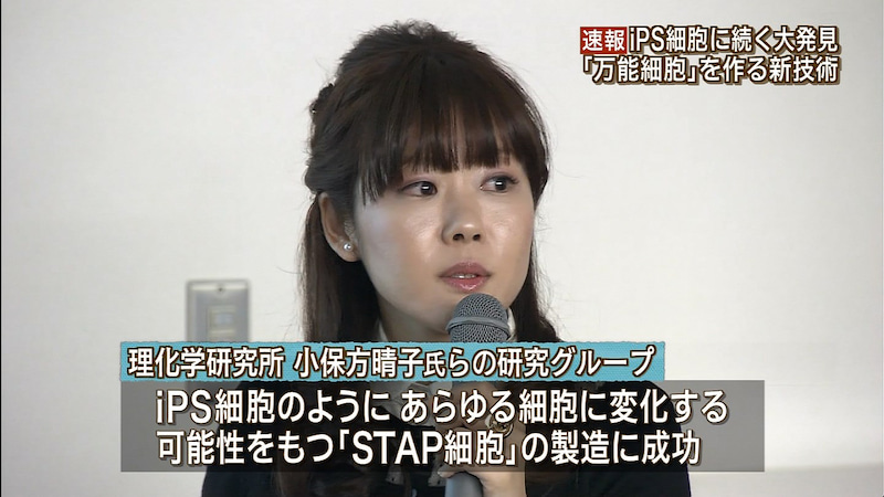 お ぼ 方 晴子 stap