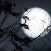 十六夜の満月★追画あり