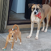 お隣のソーレイちゃんちに子犬が増えた!と、クリスマスイベントのこと。