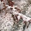 雪、気をつけたい交通事故の画像
