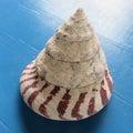 shell-tm 貝の小部屋