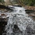 加波山で一枚岩、粟又の滝も見よう 養老渓谷:モミジ、ここは:クヌギの紅葉