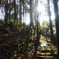 耳納山を越えて枡形山へ