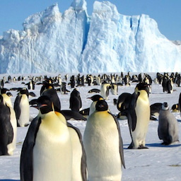 画像 12月14日・南極の日…(#5769) の記事より 2つ目
