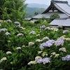 香川 さぬき 紫陽花の寺 勝名寺の画像
